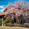 Splendida villa singola con giardino